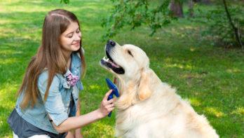 Vacht van hond verzorgen