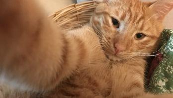 10 x de beste selfies van dieren