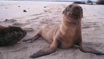 Spelende zeeleeuwtjes stelen je hart
