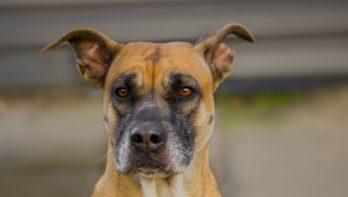 Hond Scooby zoekt structuur in haar leven