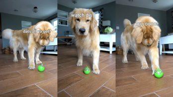 Hond vindt kattenspeelgoed maar gek