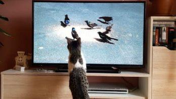 Kat kijkt tv