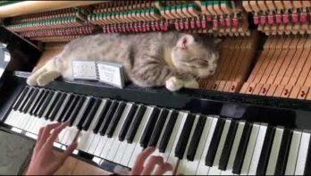 Kat slaapt rustig door tijdens het pianospel