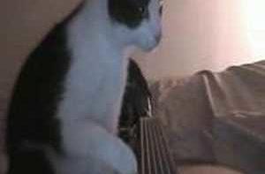 Kat speelt gitaar
