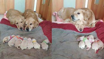 Papa- en mamahond zijn verliefd op hun puppy's
