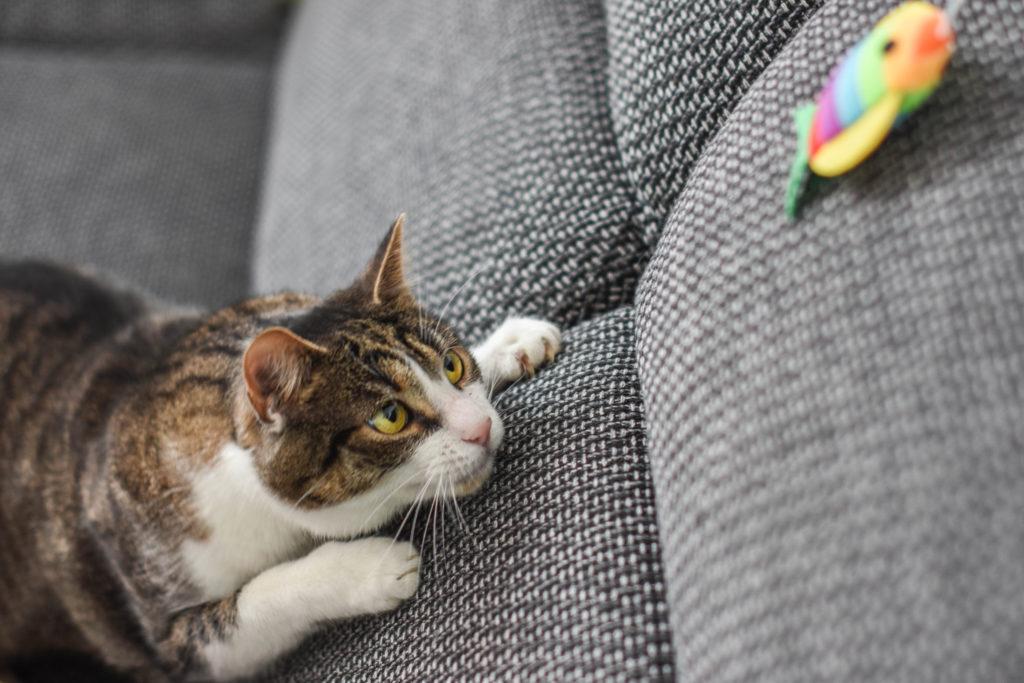 bange kat ontspannen