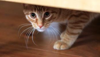 Help bange kat van zijn angst af