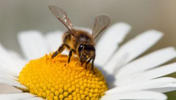 Bijenvolken hebben winter overleefd