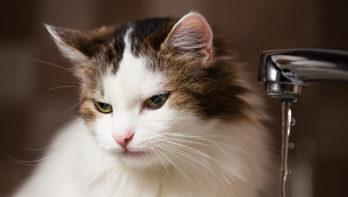 Als je kat niet wil drinken... Watertips!