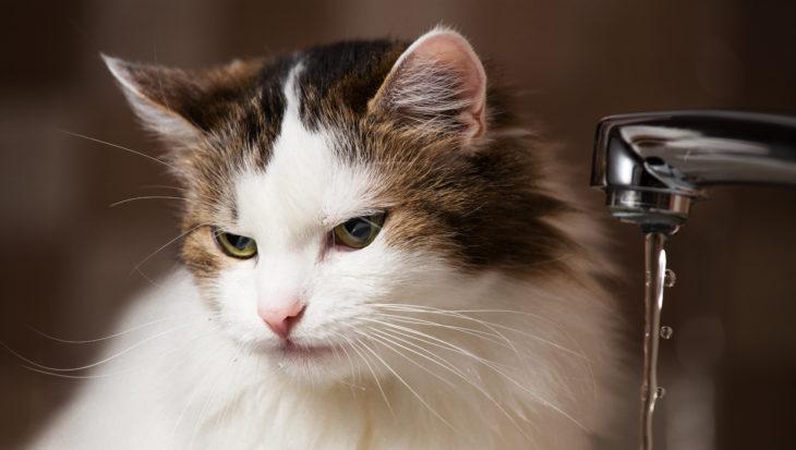 Als je kat niet wil drinken… Watertips!