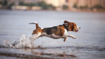 Tips om hond veilig te laten zwemmen