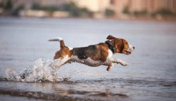 zwemmen hond veilig