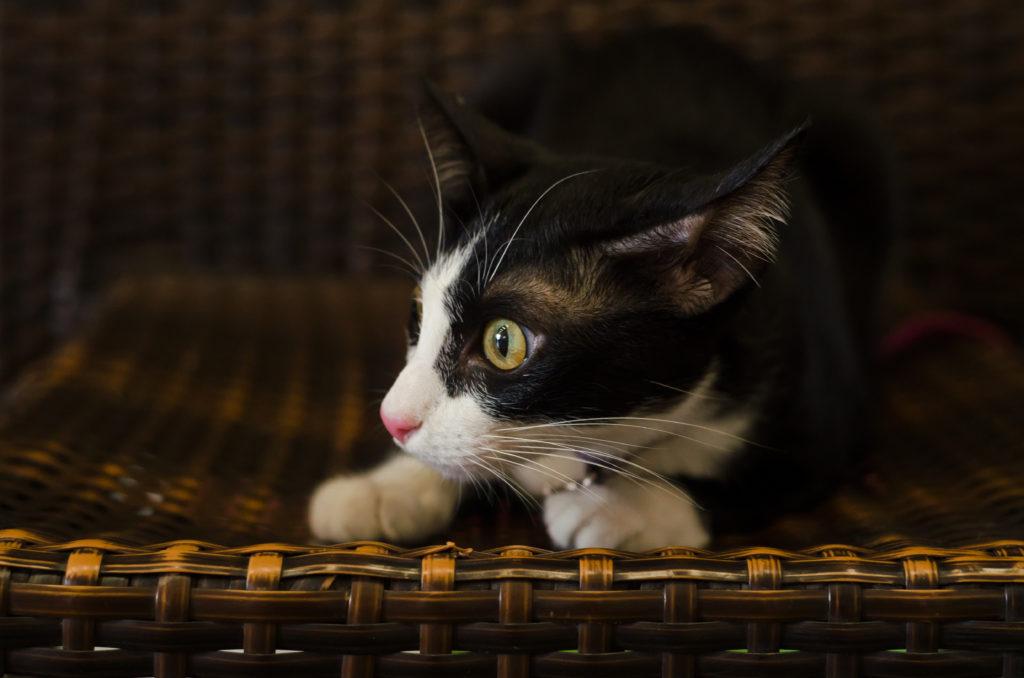 Bange kat signalen angst