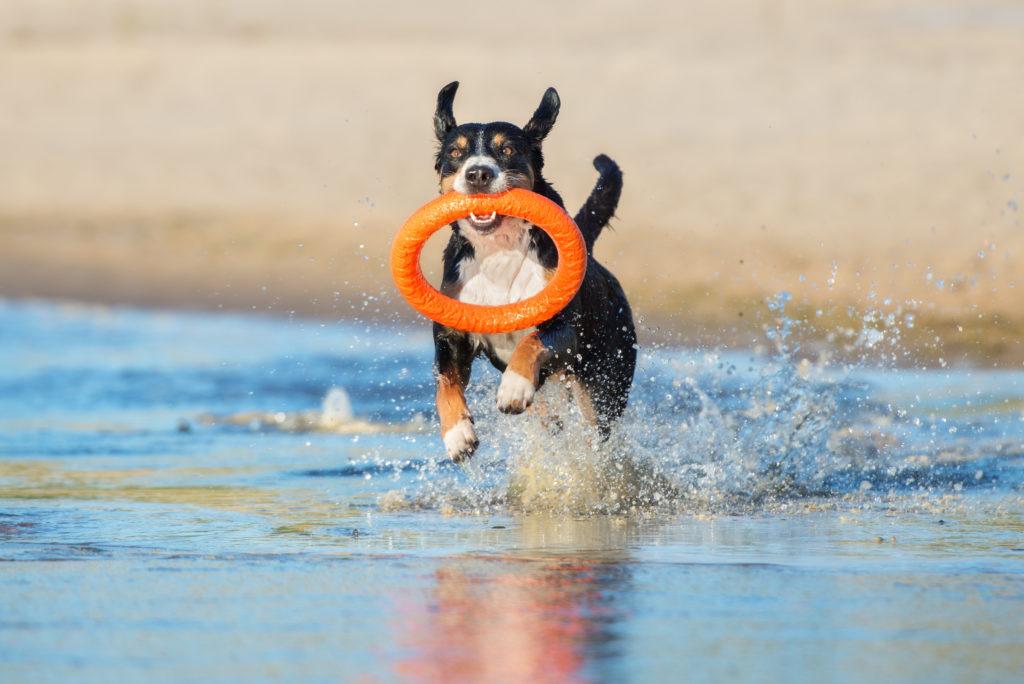 zwemmen honden veilig 4