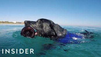 Hond duikt plastic op uit zee