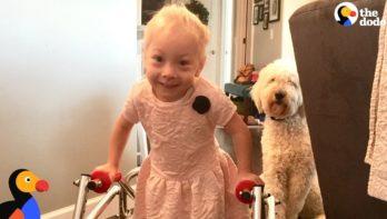 Hond helpt zusje alsnog te kunnen lopen
