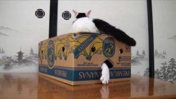 Kat doet de verdwijntruc