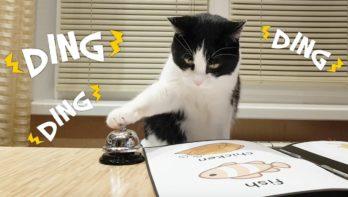 Katten weten precies wat ze willen