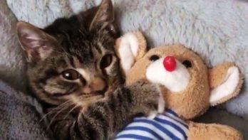 Kitten slaapt niet zonder zijn knuffel