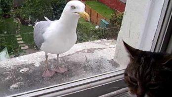 Ontmoeting tussen kat en zeemeeuw