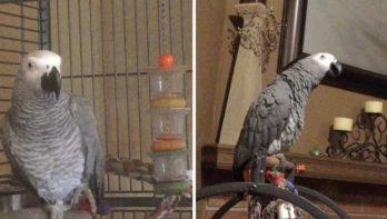 Papegaai wordt gek van blaffende hond