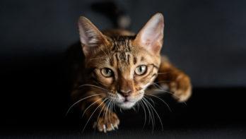 Help, mijn kat krabt me!