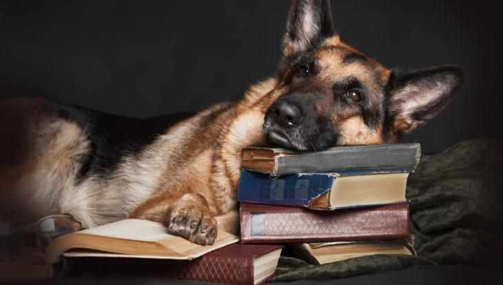 Heeft je hond een hondenschool nodig?