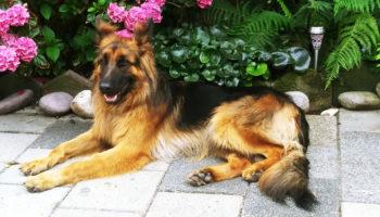 hond Daico herplaatser