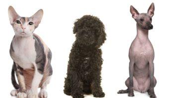 Anti-allergie honden en katten fabeltje?