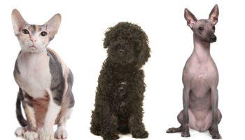 anti-allergie honden en katten