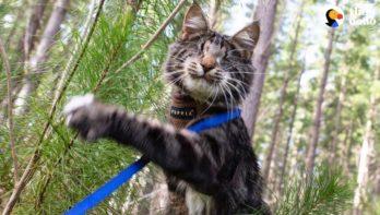 Blinde kat laat zich niet tegenhouden