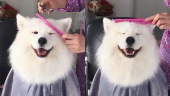 Hond maakt zelf een kappersafspraak