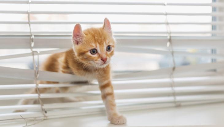 Is jouw kat een engel of een bengel?