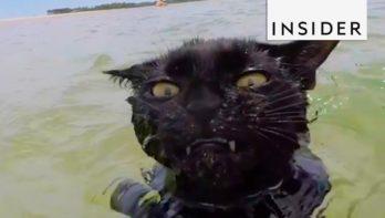 Kat zwemt graag in de zee