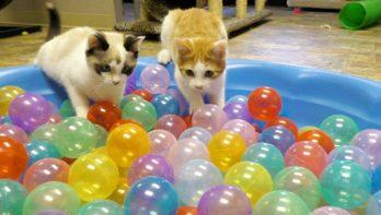 Katten in de ballenbak