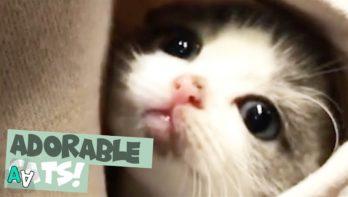Kattenbeelden om bij weg te zwijmelen
