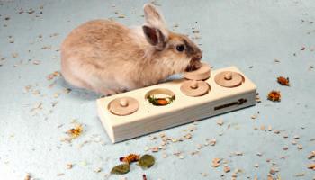 intelligentiespelletjes konijnen