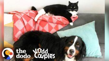 Hond heeft het zwaar met zijn kattenzusje