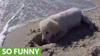 Puppy boos op de zee