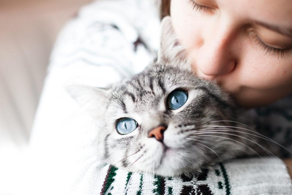 spelen katten band versterken