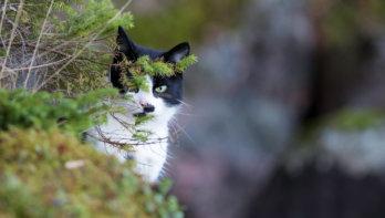 Kat voor het eerst naar buiten... Tips!