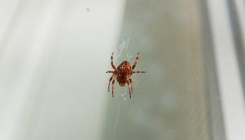 spin vangen