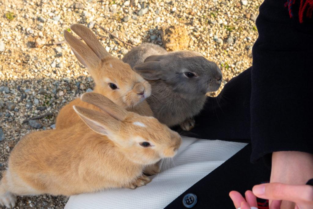 intelligentiespelletjes konijnen spelen