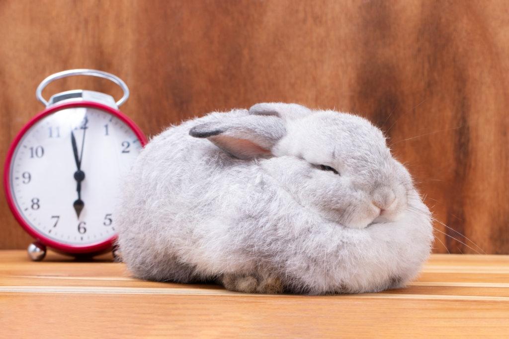 intelligentiespelletjes konijnen tijd