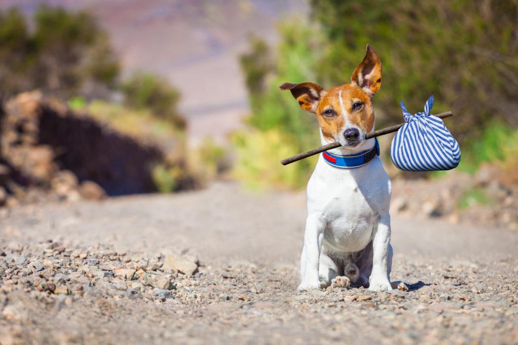 hond mee op vakantie reistips