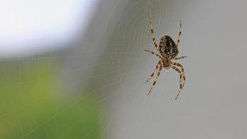 Zet spinnen in huis weer buiten