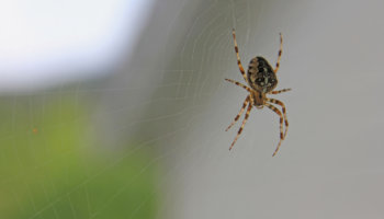 spin in huis vangen