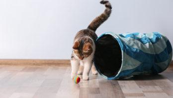 Waarom spelen zo belangrijk voor katten is...