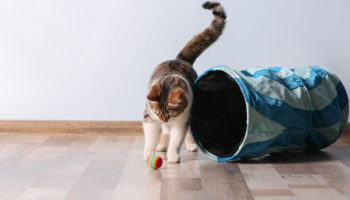 katten spelen belangrijk