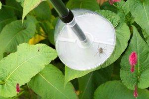 spin makkelijk vangen bugaway